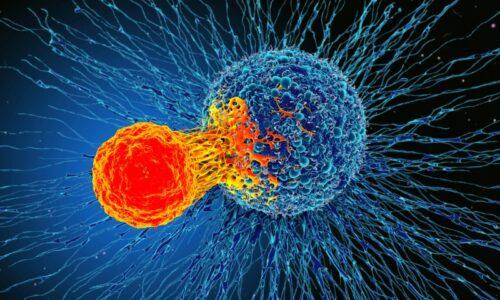 Cancer Immunotherapy Market